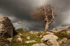 Tempestade nas montanhas Fotos de Stock Royalty Free