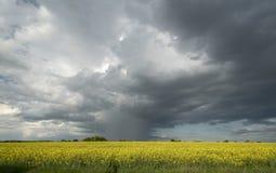 Tempestade sobre o campo da colza Imagens de Stock