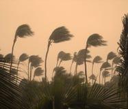 Tempestade tópica Fotografia de Stock Royalty Free