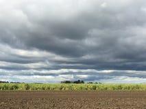 Tempestades através do sugacane Imagens de Stock