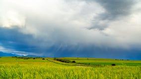 Tempestoso si rannuvola i giacimenti di grano illuminati dal sole 4K Timelaps video d archivio