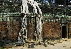 Tempiale dell'AT Prohm fotografie stock libere da diritti