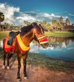 Tempiale di Angkor Wat al tramonto La Cambogia cambodia fotografie stock
