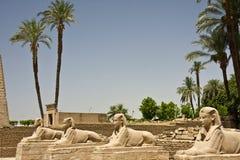 Tempiale di Luxor Immagine Stock