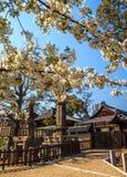 Tempiale giapponese Immagini Stock