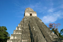 Tempiale Mayan Tikal, Guatemala Immagine Stock Libera da Diritti