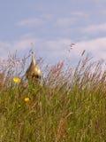 Tempiale ortodosso nell'erba di prato immagine stock libera da diritti