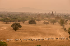 Tempie antiche Bagan Myanmar Immagine Stock