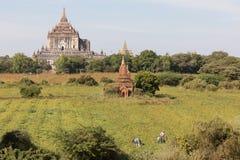 Tempie antiche di Buddha in Bagan, Myanmar (Birmania fotografie stock libere da diritti
