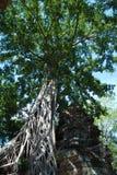 Tempie della Cambogia negli alberi Fotografia Stock