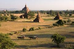 Tempie di Bagan in Myanmar Fotografie Stock Libere da Diritti