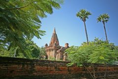 Tempio di Bagan incorniciato albero fotografia stock libera da diritti
