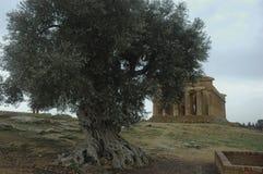 Tempio di Concordia fotografia stock