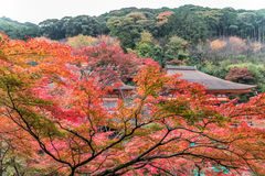 Tempio di Kiyomizu-dera nella stagione di autunno a Kyoto, Giappone Immagine Stock