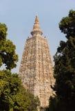 Tempio di Mahabodhi, fico delle indie orientali Gaya Immagine Stock