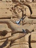 Tempio di Philae Fotografie Stock