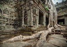 Tempio di Prohm Budhist di tum a Angkor Cambogia Fotografia Stock