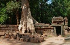 Tempio di Prohm di tum. Angkor. La Cambogia Fotografia Stock Libera da Diritti