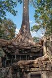 Tempio di Prohm di tum. Angkor. La Cambogia Immagini Stock Libere da Diritti