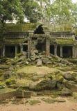 Tempio di Prohm di tum, Angkor Wat, Cambogia immagine stock