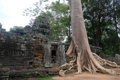 Tempio di Prohm di tum come in Tom Raider in Angkor, Cambogia fotografia stock libera da diritti