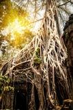 Tempio di Prohm di tum coperto di alberi di banyan Angkor Wat, Siem Reap, Cambogia Immagini Stock