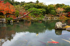 tempio di tenryu-ji in autunno, Arashiyama Immagine Stock Libera da Diritti