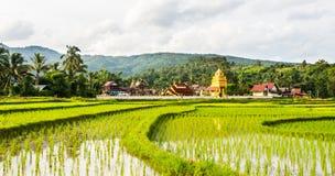 Tempio e campo tailandesi Immagini Stock