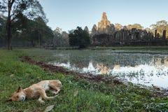 Tempio e cane di Bayon Immagine Stock
