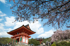 Tempio e Sakura Flowers di Kiyomizu Fotografia Stock Libera da Diritti