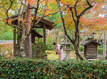 Tempio giapponese in autunno Fotografia Stock Libera da Diritti