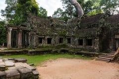 Tempio in giungla - tempio di Prohm di tum Immagine Stock
