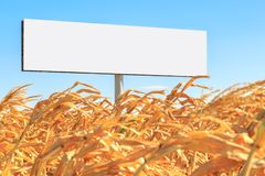 Template as white empty rectangular form billboard on a yellow corn field Royalty Free Stock Photos
