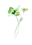 Template for card with green flowers. Watercolor painting Royalty Free Stock Photos
