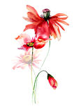 Template for card with Poppies and Gerbera flowers. Watercolor illustration Royalty Free Stock Image