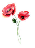 Template for card with with Poppy flower. Watercolour illustration Royalty Free Stock Photography