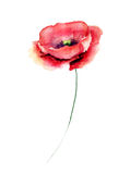 Template for card with Poppy flower. Watercolour illustration Royalty Free Stock Photos