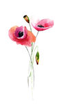 Template for card with Poppy flowers Stock Photography