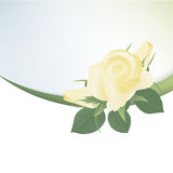 Template card with yellow roses Royalty Free Stock Photo