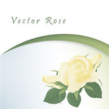 Template card with yellow roses Stock Images