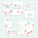 Template cards set with watercolor tender pink Cosmos flower Royalty Free Stock Photography