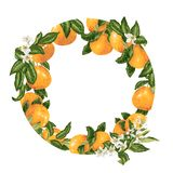 Template decorative vector element with citrus fruits in circle. Design graphic illustration stock photography
