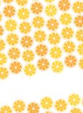 Template Design cover. sliced halves of citrus fruits. Template Design cover. Vector illustration of sliced halves of citrus fruits oranges and tangerines. For Stock Images