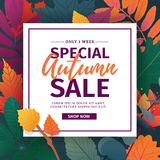 Template design discount banner for autumn season. Poster for special fall sale with flower and herb, autumnal leaf Stock Photos