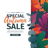 Template design discount banner for autumn season. Poster for special fall sale with flower, lleaf decoration. Layout. For autumnal offer on natural, floral Stock Photography