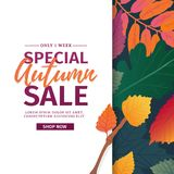 Template design discount banner for autumn season. Poster for special fall sale with flower, lleaf decoration. Layout. For autumnal offer on natural, floral Royalty Free Stock Image