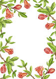 Template with fruit tree branches, leaves,flower and pomegranates Stock Images
