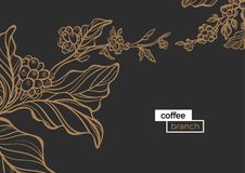 Template of golden branch of coffee tree with leaves and natural coffee beans. Organic product. Silhouette, art line. Botanical illustration. Vector isolated royalty free illustration