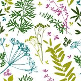 Template. Herbarium with wild flowers, branches, leaves. Botanical background on white vector illustration