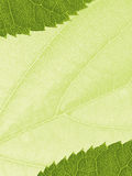 Template with leaf texture Royalty Free Stock Image